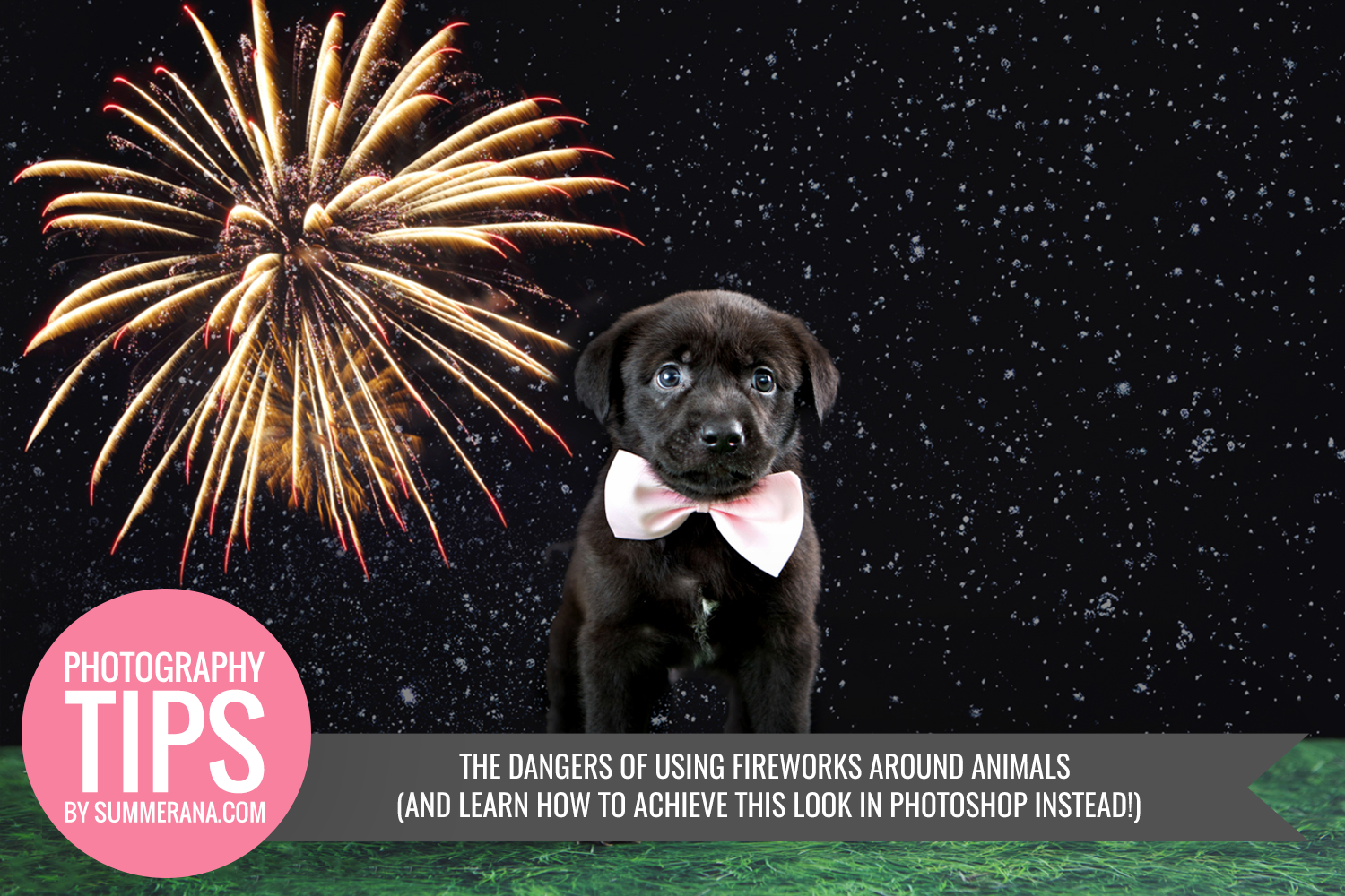 The-Dangers-of-Using-Fireworks-Around-Animals-And-Learn-How-to-Achieve-this-Look-in-Photoshop-Instead!