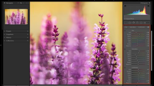 8-key-tools-you-should-be-familiar-with-in-lightroom-classic-hsl-color
