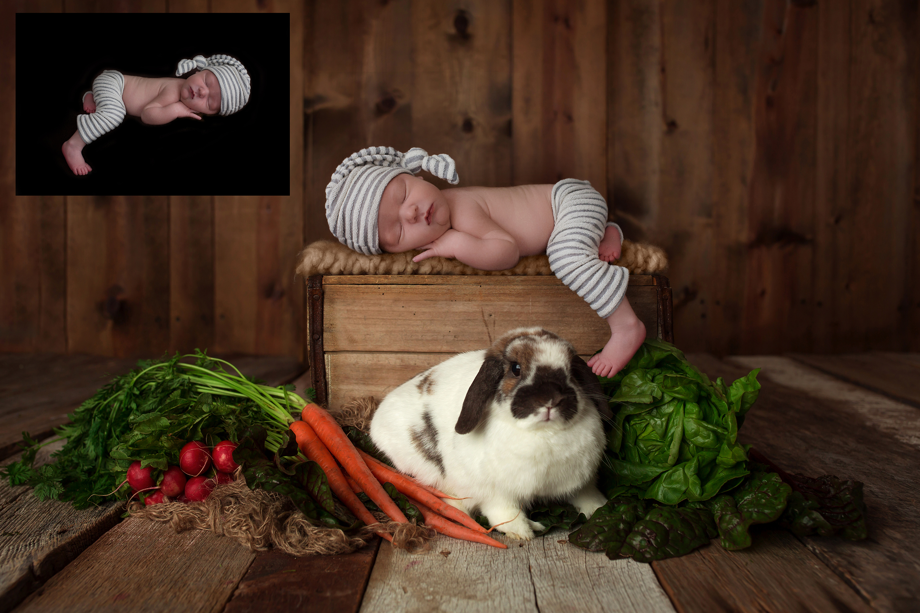easter-Newborn-digital-background-for-photographers
